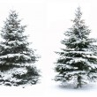 Christmas tree — Stock Photo #7657983