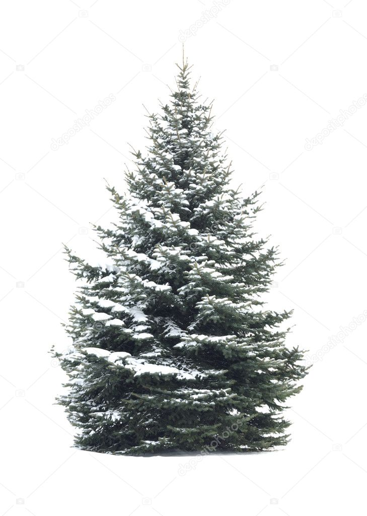 Christmas Tree - Isolated over White background  Stock Photo #7825194
