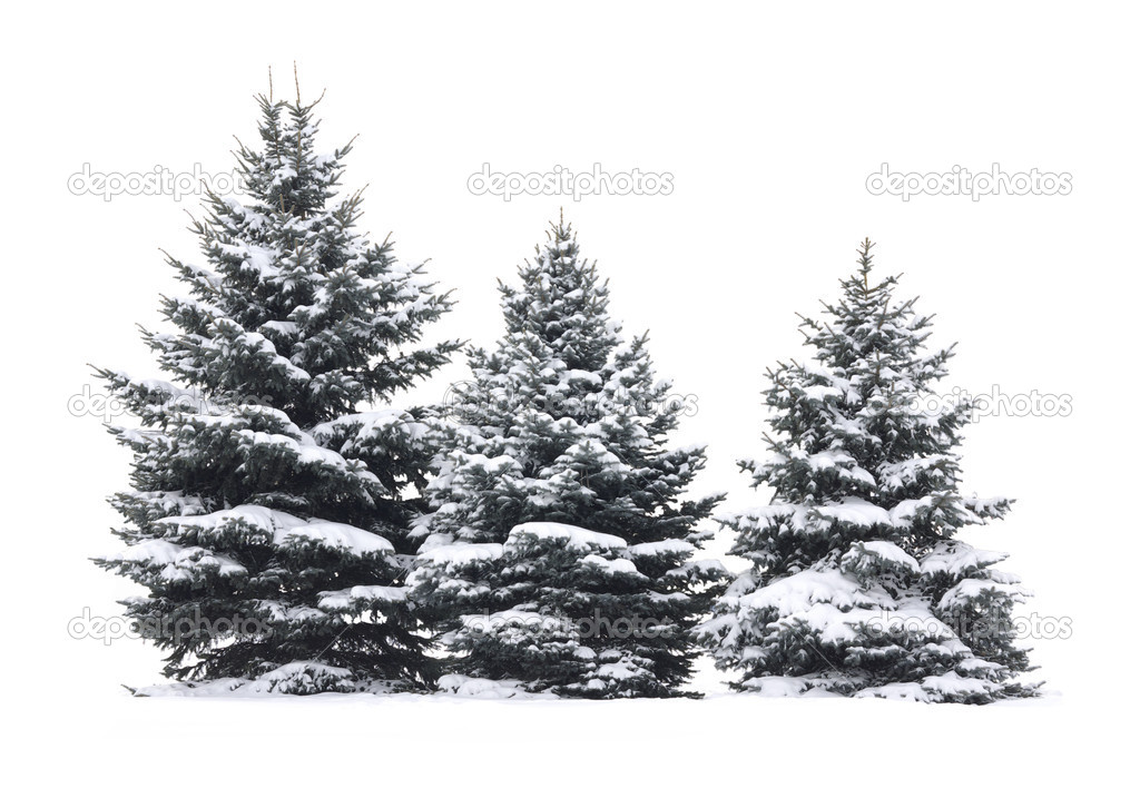 Christmas Tree - Isolated over White background — Stock Photo #7825416
