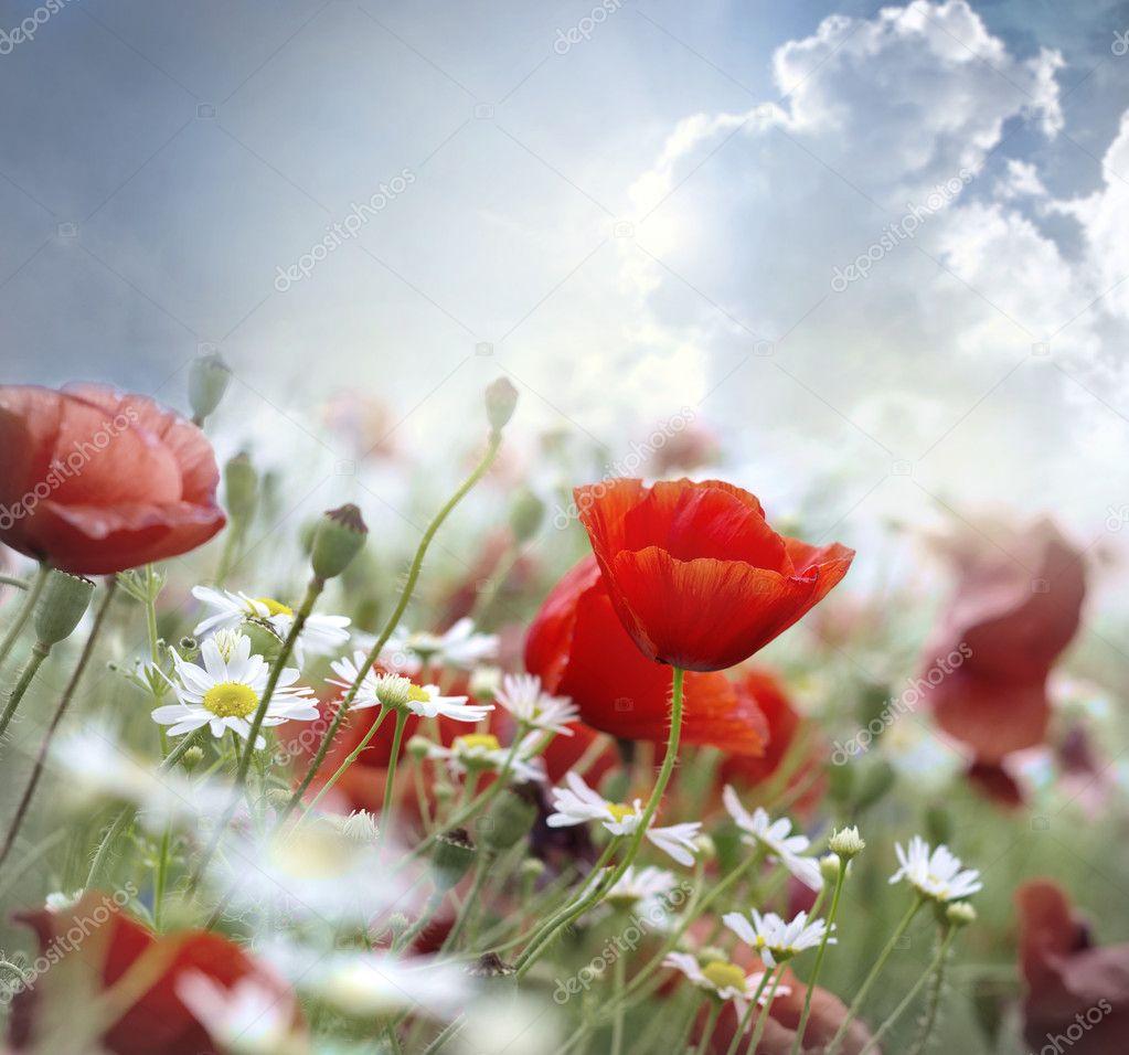 Фотообои Poppy red