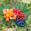 Wild berries on green leaves — Foto Stock