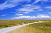 Road in a meadow — Stock Photo
