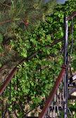 Spiraltrappa i trä i en grönskande trädgård — Stockfoto
