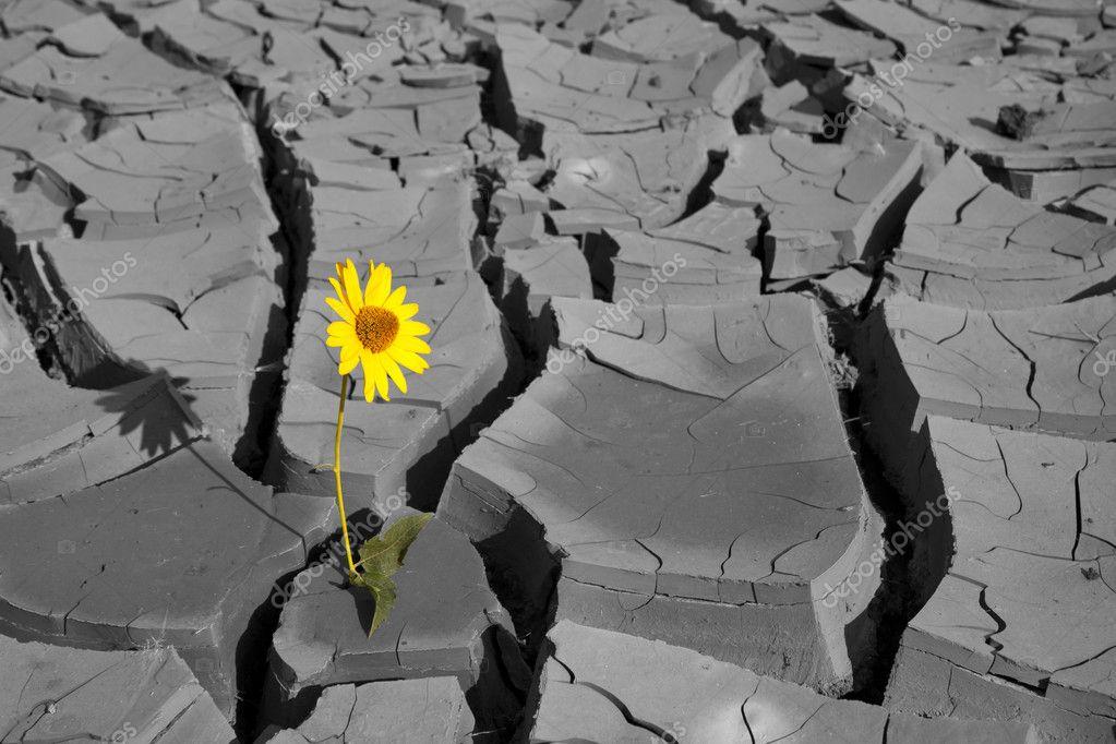 Засухоустойчивые растения и цветы. Сад, не боящийся засухи