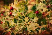 Retro image with berrys — Stock Photo