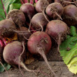 Beetroots harvest — Stock Photo