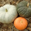 Three colorful pumpkins — Stockfoto
