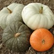 Pumpkins harvest — Foto Stock