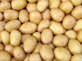 Harvested potato tubers — Stock Photo