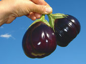 Eggplants in hand — Stock Photo