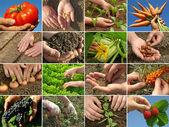 Zemědělství koláž — Stock fotografie
