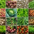 Vegetables and greens - Stock Photo