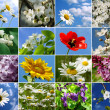 Flowers collage — Stock Photo #7948040