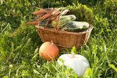 Gerdanlı sepet bir çim üzerinde sebze iliği ve — Stok fotoğraf