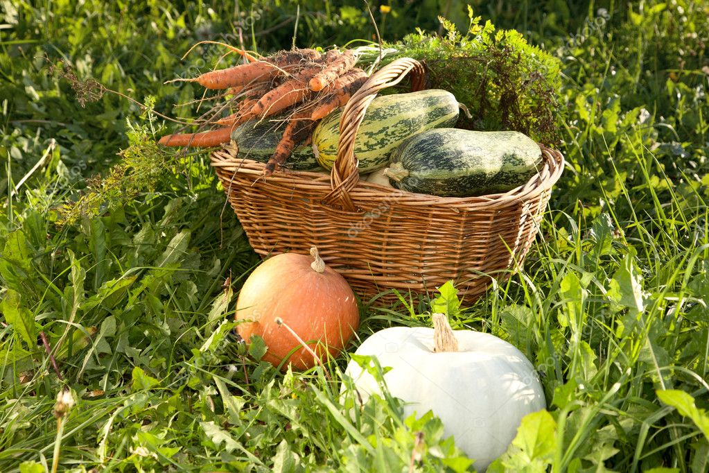 Wattled basket with vegetable marrows on a green grass — Stock Photo #6950727