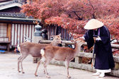 Buddhist monk and two deers — Stock Photo