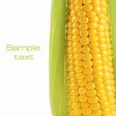 Corn on a white background — Stock Photo
