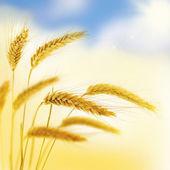Beautiful floral border.Wheat. — Stock Photo