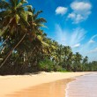 Idyllic beach. Sri Lanka — Stock Photo #7341306