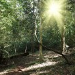 Sunlight in tropical jungle forest — Stock Photo #7341370