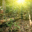 Sunlight in tropical jungle forest - Stok fotoraf