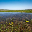 Meadow flooded with spring waters - Stock Photo