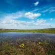 Meadow flooded with spring waters — Stock Photo #7341580