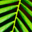 Palm leaf close up - Stockfoto
