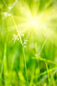 Green grass - shallow depth of field — Stockfoto
