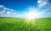 Sunset sun and field of green fresh grass under blue sky — Stock Photo