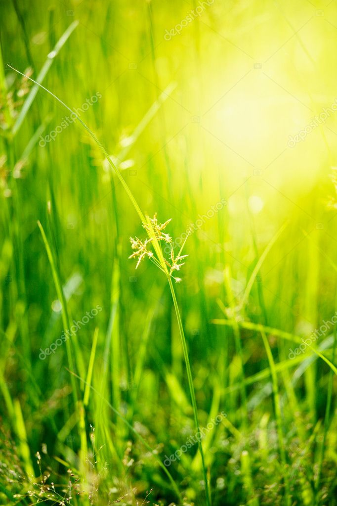 Green grass - very shallow depth of field — Stock Photo #7341125