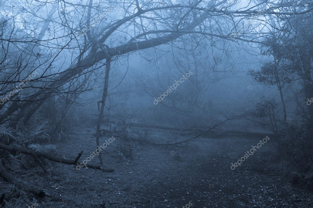 Tropical forest in thick fog — Photo #7341404