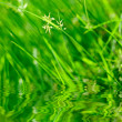 Green grass with reflection - Stock Photo