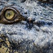 Crocodile eye - Stockfoto