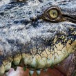 Crocodile eye - Foto de Stock