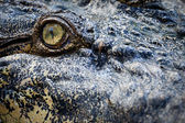 Crocodile eye — Foto Stock