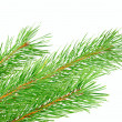 Pine branch — Stock Photo #7827487