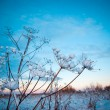 Winter scene — Foto de stock #7910142