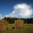 Haymaking time — Stock Photo #6929000