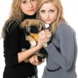 Two pretty young women with pekingese — Stock Photo