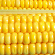 Yellow corn — Stock Photo