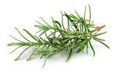 Lavender branch — Stock Photo
