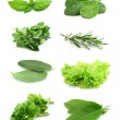 Collage of green and juice spice — Stock Photo #7908461