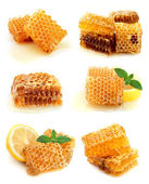 Collection of honey — Stock Photo