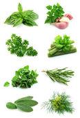 Koláž zelené — Stock fotografie
