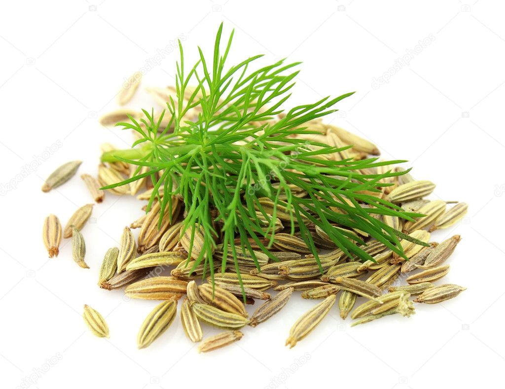 Seeds and a fennel branch on a white background — Stock Photo #7908420