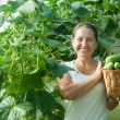 Happy woman with harvested cucumbers — Stock Photo