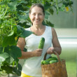 Mature woman picking cucumbers — Stock Photo