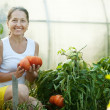 Royalty-Free Stock Photo: Woman picking tomato