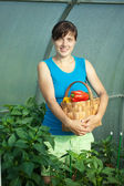 Woman with harvested pepper — Stock Photo
